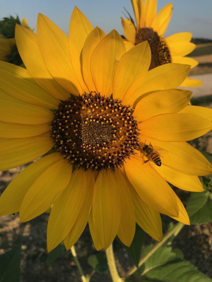 Bibi Horst hat die Biene lachen gehört im Buch Schokoladenjahre, seid gespannt.